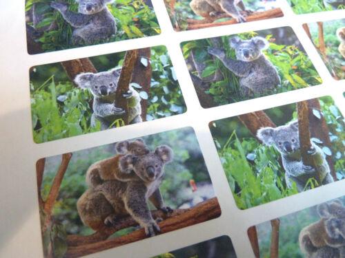 KOALA Orso Fauna Selvatica Animale Giungla etichette autoadesive Adesivi Per Bambini /& Craft