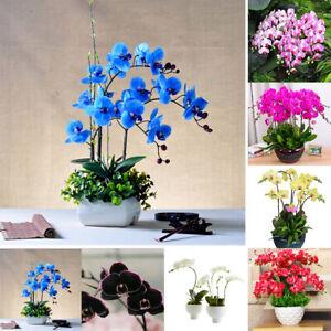100Pcs-Orchid-Seeds-Flower-Plant-Office-Home-Ornament-Garden-Window-Bonsai-Decor
