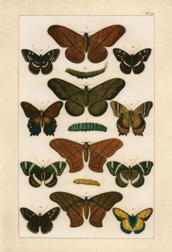 High Quality Reproduction Old Nature Print Butterfly VINTAGE BUTTERFLY PRINT