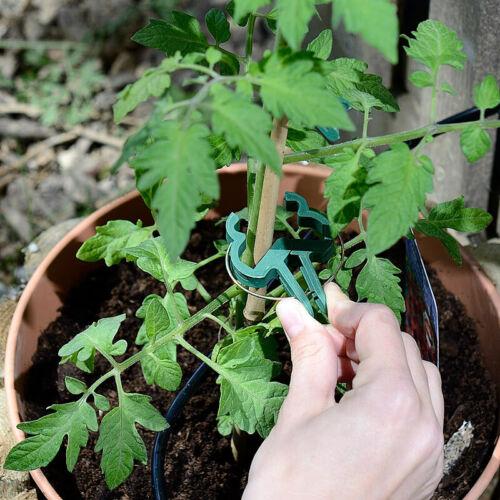 je 71-teilig 2 Pflanzenbefestigungs-Sets mit Pflanzenclips XXL-Pack