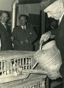 France-Lille-Region-Pigeon-Racing-Fancying-Contest-Colombophilie-Old-Photo-1935