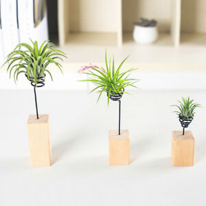 Image Is Loading Nordic Wooden Air Plant Stand Holder Tabletop Tillandsia