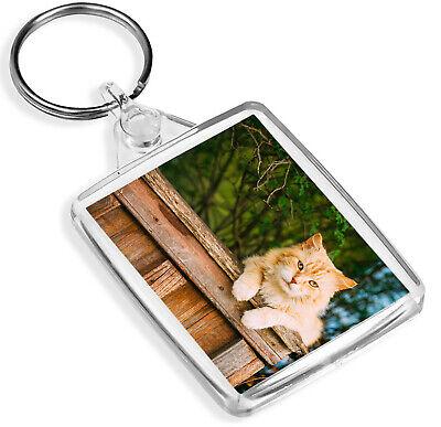 Carino Gatto Ginger Portachiavi-ip02-bellissima Gattino Gatti Amante Cool Regalo #8378-mostra Il Titolo Originale Rinfresco