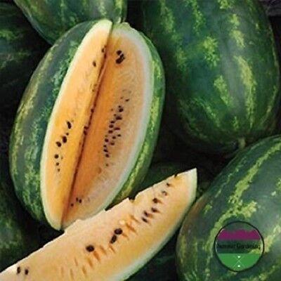 USA HEIRLOOM Organic All Sweet Watermelon 25-200 seeds
