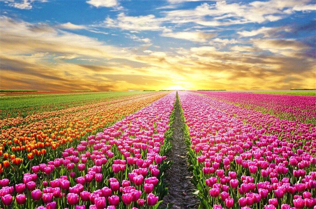 3D Himmel Blumen Natürlich 809 809 809 Tapete Wandgemälde Tapeten Bild Familie DE Jenny 0591ba