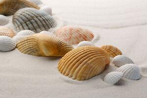 Image result for australia shell beach