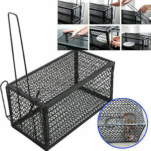 2 x RAT CATCHER SPRING CAGE TRAP HUMANE LARGE LIVE ANIMAL RODENT INDOOR OUTDOOR