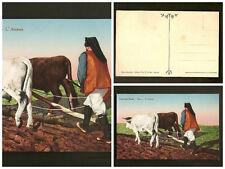 Cartolina costumi sardi L'aratura