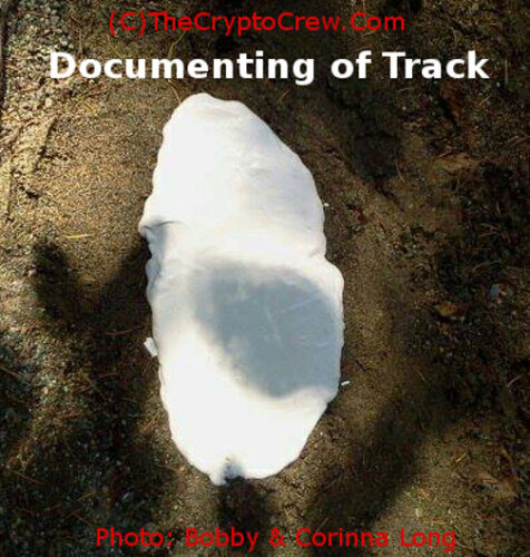 Found in 2013 Real Bigfoot Track Casting Juvenile Track LOOK!