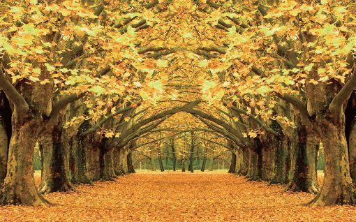 3D Üppige Bäume, Laub 343 Fototapeten Wandbild Fototapete BildTapete Familie
