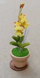 1.12 échelle Jaune Orchid & Pot Maison De Poupées Miniature Jardin Fleurs Accessoire 30-afficher Le Titre D'origine RafraîChissement