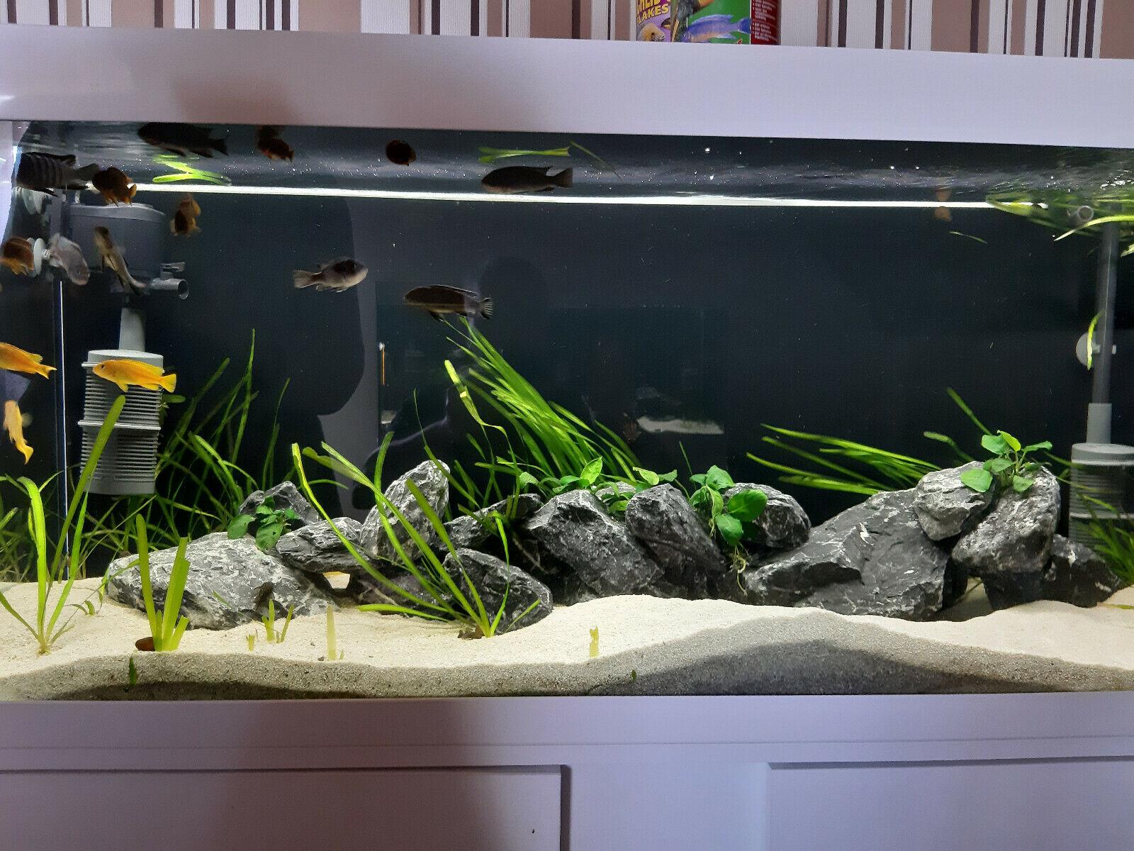Alpenkalk Steine Aquarium ab    1kg  25-50-75 kg kostenloser Versand