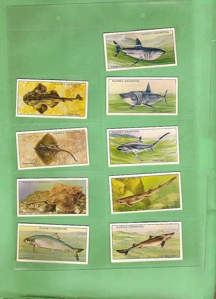 D129. 1935 SEA FISHES  CIGARETTE CARDS, 45 of 50