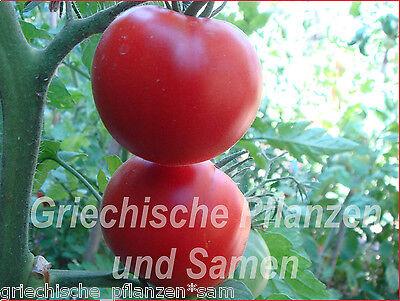 Siberian Tomate 10 frische Tomaten russische frühe Tomaten kältetolerant