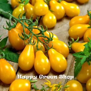 VEGETABLE-420-SEEDS-TOMATO-YELLOW-PEAR-CHERRY-BELL-Solanum-lycopersicum