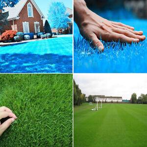 Am-500Pcs-Grass-Seeds-Lawn-Perennial-Garden-Soccer-Court-Field-Villa-Plant-NEW