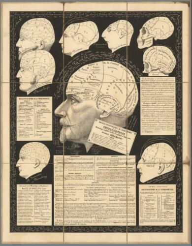 Vintage Science Poster Phrenology A4//A3 Poster