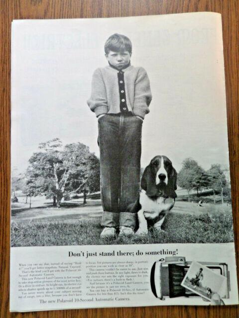 what does hound dog true mean