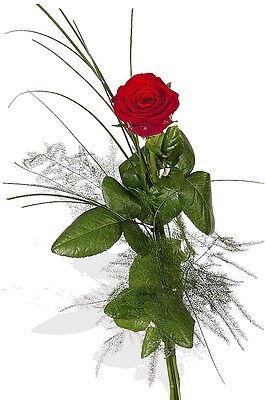 """Blumenversand Einzelne Rote Rose """"hab' Dich Lieb"""" Garten & Terrasse Blumensträuße"""