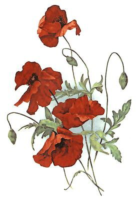 Red Poppy Flower Bouquet Spray Select-A-Size Waterslide Ceramic Decals Bx