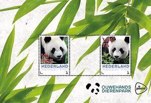 Postset-Chinese-Reuzenpanda-039-s-Wu-Wen-amp-Xing-Ya-in-Ouwehands-Dierenpark-PF