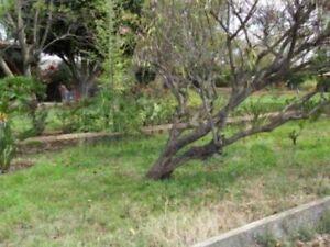 Terreno en Renta, Morelia, Michoacán de Ocampo