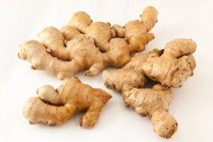 NEW-Fresh-Organic-None-GMO-Ginger-Root-1lb