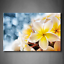 Yellow Orange White Frangipani Plumeria Rubra Flowers Bouquet With Fresh Water