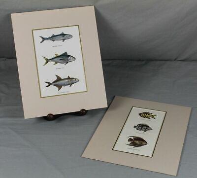 6x Fisch Darstellung - Alt Colorierte Litho Um 1865 - Mit Passepartout (7) A/296