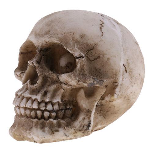 Model Resin Human Skull Small Size Halloween Skull for Kids Toy Gift