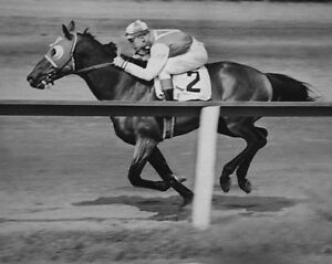 1938-Champion-Racehorse-SEABISCUIT-Glossy-8x10-Photo-Print-Thoroughbred-Horse
