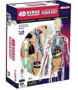 Details about New 4D Puzzle Human Anatomy 3D Model Transparent Full Body  Skeleton Torso Organ