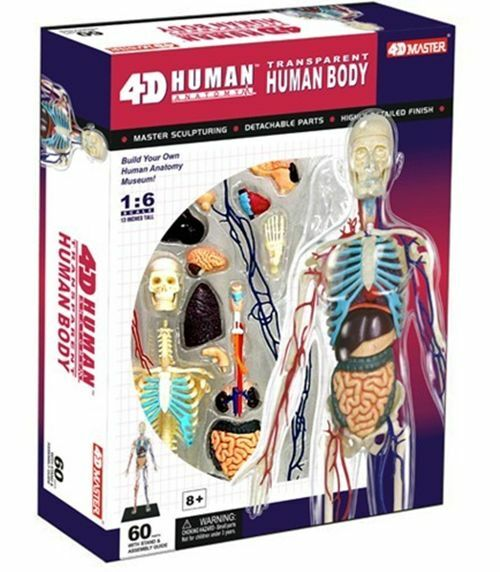 4d Puzzle Human Anatomy 3d Model Transparent Full Body Skeleton