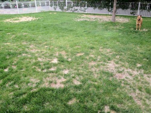 Fast Growing Rapid Lawn Grass Seed /& Fertiliser Quick Fix Repair Next day  3Kg