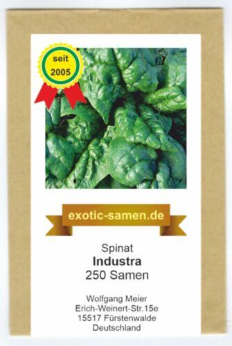 Autumn Harvest Industra 250 Seeds Spinach Spinacia oleracea-Summer-U