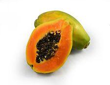 Carica papaya HAWAIIAN SOLO PAPAYA 'SUNRISE' Seed to Fruit in 9 Months ~SEEDS~