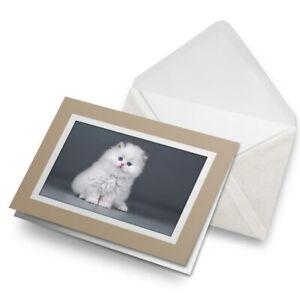 Greetings-Card-Biege-White-Fluffy-Cat-Kitten-Portrait-16911