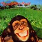 Supernaturals It Doesn't matter Anymore CD 12 Track UK