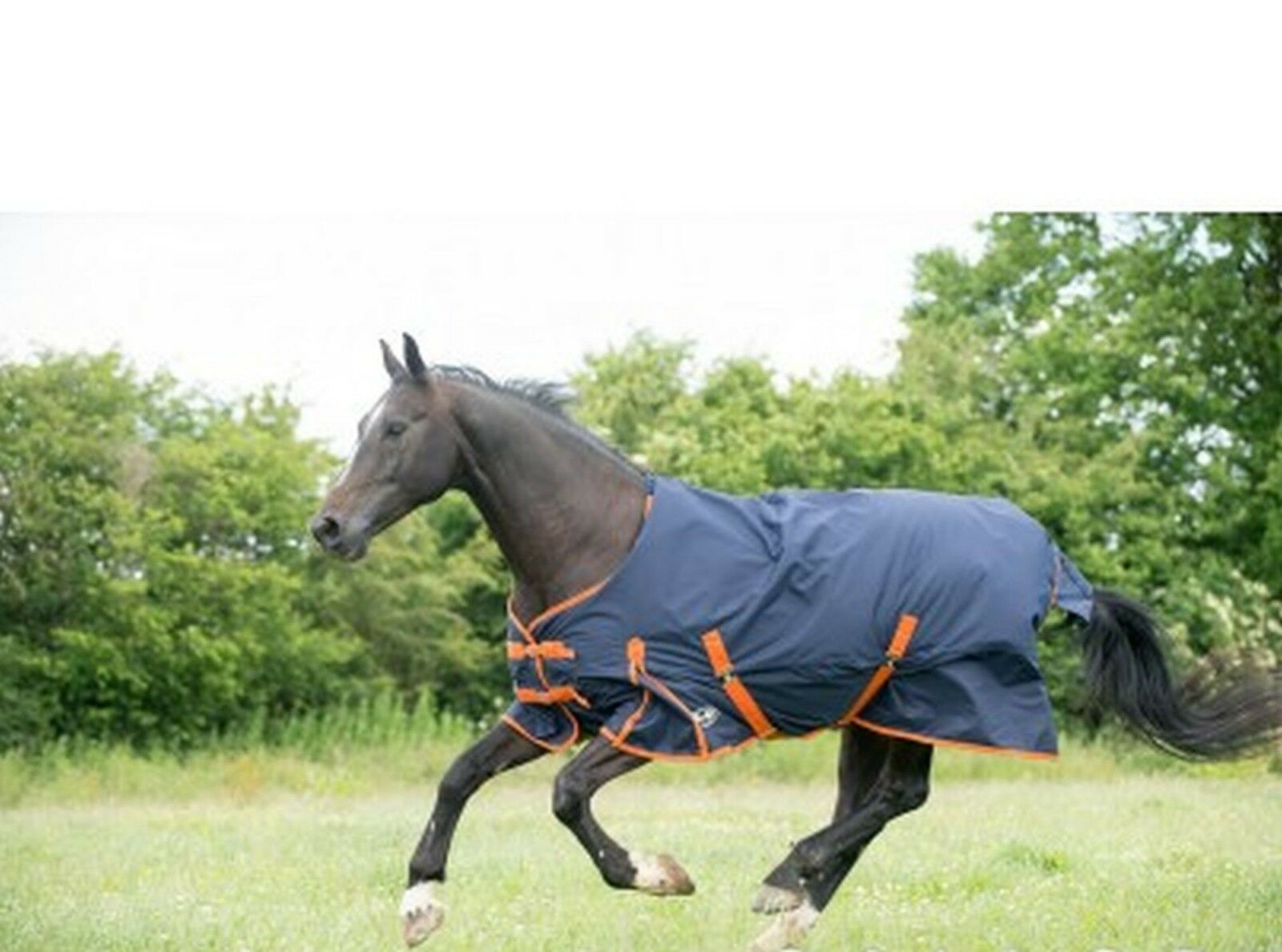 Gallop Trojan 100g Fill Turnout Rug - Horse Pony Outdoor Rug - All Sizes