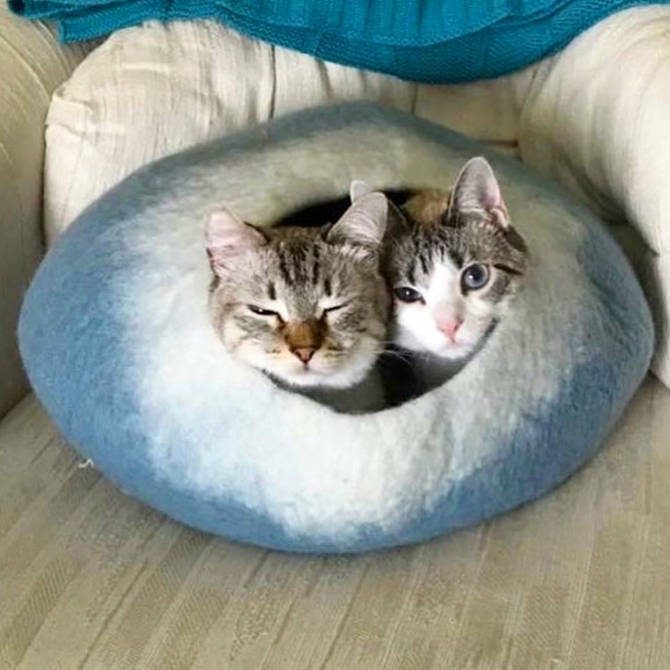 Walking Palm Cat Cave Bed - LARGE - Light Blau and Weiß FREE SHIPPING from USA