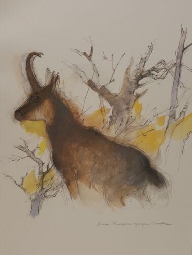 Vintage Lithograph Art Print Rudicapra Rudicapra Chamois European Mountain Goat