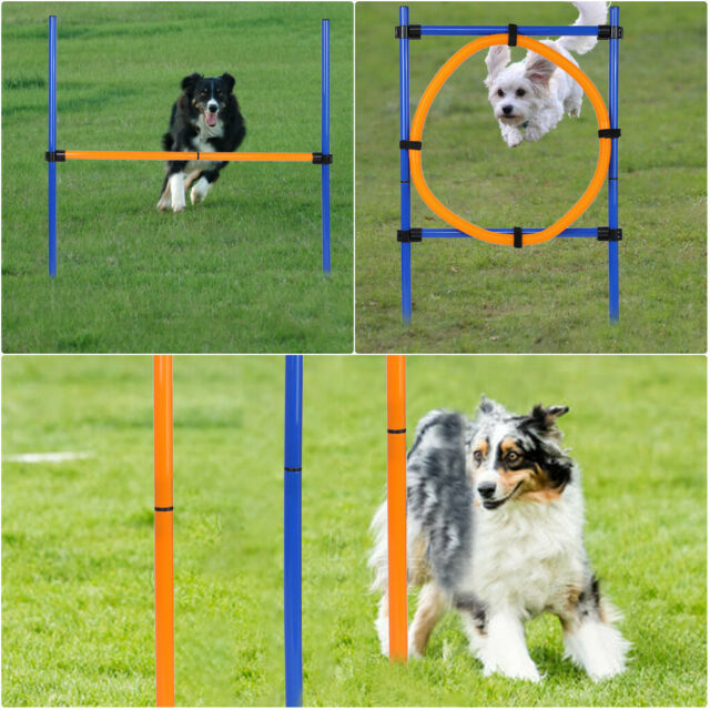 Pet Agility Training Set Dog Kit Starter Obstacle Course