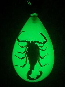 324ba25e4904 Image is loading Real-Scorpion-Luminescent-Keychain-Keyring-Gold-Scorpion- Glow-