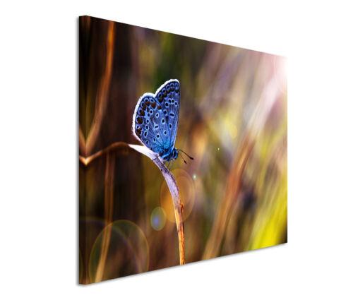Leinwandbild 120x80cm auf Keilrahmen Schmetterling,Nahaufnahme,Frühling