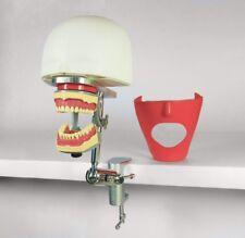 Dental Manikin Phantom Head Simulator Typodont Jaw 2 Teeth Set