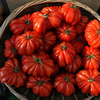 Hot Rare 50pcs Sweet Tomato Fruit Vegetable Seed Home Garden Plant Seeds