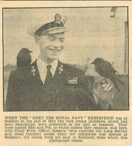 1954 Chief Petty Officer Roberts With Two Young Jackdaws - <span itemprop='availableAtOrFrom'>Bishop Auckland, United Kingdom</span> - If for any reason you are not satisfied with your item, do let us know. If you wish to return it, you may, within 14 days, and we will issue you with a full refund. Most purchases - <span itemprop='availableAtOrFrom'>Bishop Auckland, United Kingdom</span>