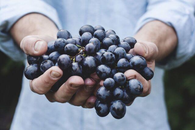 Grape Seeds - BONHEUR - Black Seeded Fruit - Organic  - 15 Seeds