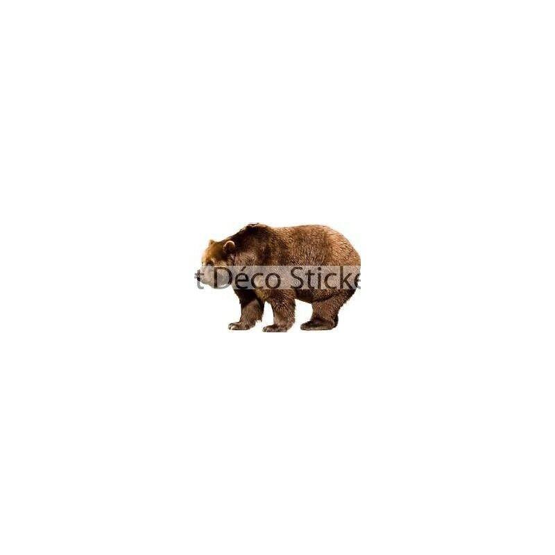 Adesivo Adesivo Adesivo animale Orso 90x59cm 543b2c