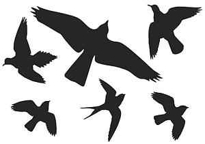 Details Zu Vogel Aufkleber Vögel Vogelschutz Warnvögel Wintergarten Fenster An 500